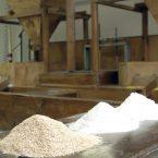 Molino del cantaro: festeggiamo il ritorno della produzione del grano Rieti1