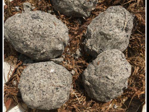 Uova di dinaosauro