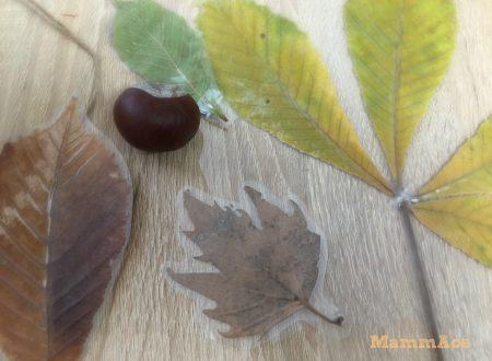 Come conservare le foglie secche
