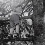 L'albero maestro