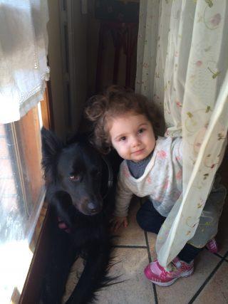 Come presentare il neonato al cane