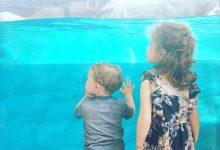 Un'acquatica giornata a Gardaland Sea Life