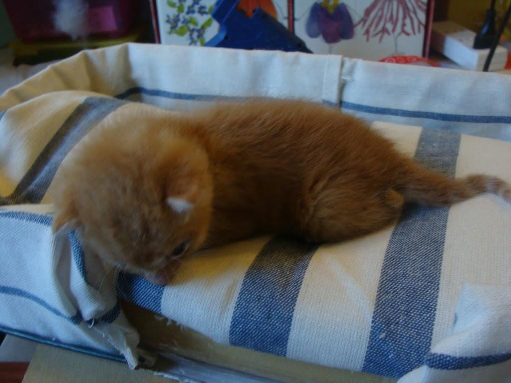 Cuccia per gattini fai da te con foto tutorial for Foderare una scatola