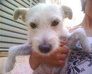 Ho adottato un cane!!!