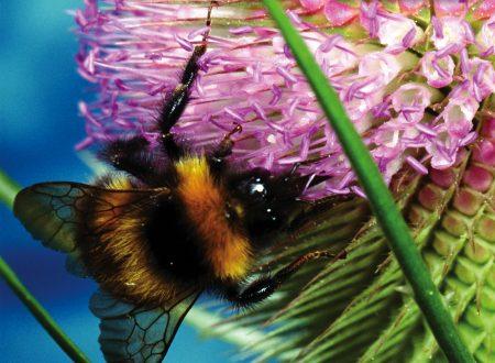 Ebook punture insetti bambini estate da scaricare gratuitamente